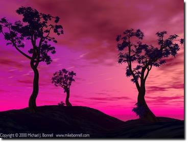 magictrees_0370.jpg