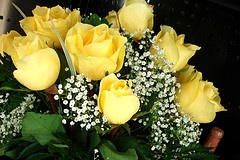 yellow-tea-roses.jpg